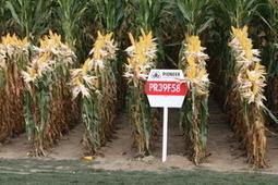 Des élus contestent le soutien des OGM par l'UE en Afrique | Questions de développement ... | Scoop.it