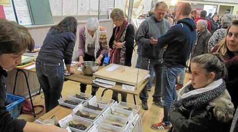 Les algues en vedette à la Fête des misainiers   Algues en Bretagne   Scoop.it