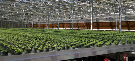 Your Future Flu Vaccines Could Be Grown Inside a Tobacco Plant | Virology News | Scoop.it