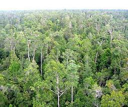 Heavily logged forests still valuable for tropical wildlife | Sustain Our Earth | Scoop.it