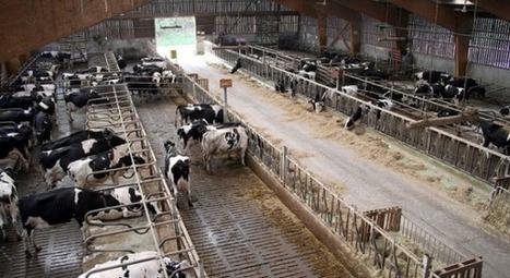 La Justice donne raison à la ferme des Mille vaches et autorise l'agrandissement du troupeau | Chronique d'un pays où il ne se passe rien... ou presque ! | Scoop.it