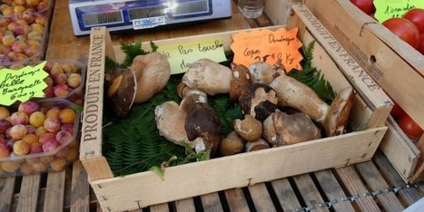 Périgueux : les premiers cèpes sont arrivés sur le marché | Agriculture en Dordogne | Scoop.it