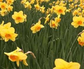 Saint David's Day - English Vocabulary, Exercises and Worksheets | British life and culture | Scoop.it