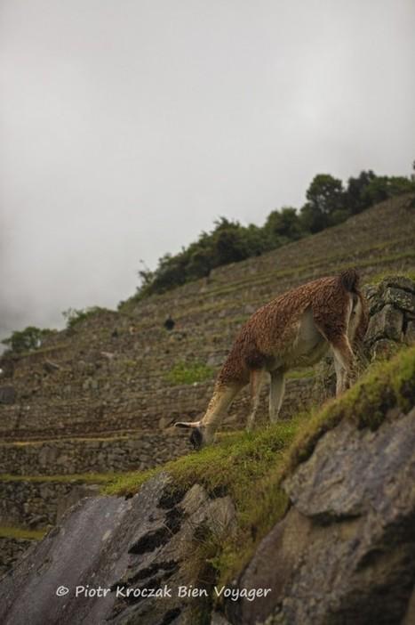 Découverte du Machu Picchu | blog de voyages : Bien Voyager | Info-Tourisme | Scoop.it