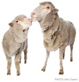 DAMNING: 35 investigations expose live export cruelty | Animals Australia | GarryRogers NatCon News | Scoop.it