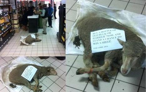 #ignoble Shop charged with #animal #cruelty after sheep tied up, displayed as prize - Times LIVE | Nature Animals humankind | Scoop.it