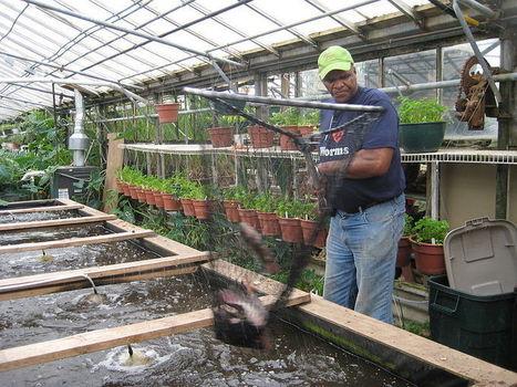What if… we could redefine farming? | Urban Aquaponics Farm | Scoop.it