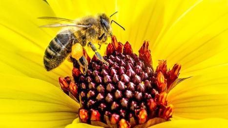 Malgré une #forte #mortalité, les #abeilles de #France #produisent un peu plus de #miel | RSE et Développement Durable | Scoop.it