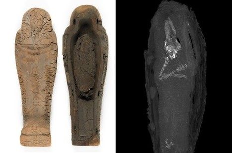 Mummified Fetus From Ancient Egypt Found | News in Conservation | Scoop.it