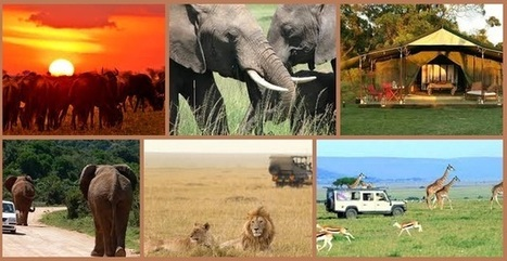 What Makes Masai Mara Safari a Favourite Tourist Destination Spot!   Safaris in India & Africa   Scoop.it