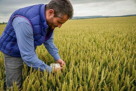 Les 5 points du plan d'aide aux céréaliers de Stéphane Le Foll - Le Figaro | Agriculture en Dordogne | Scoop.it