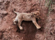 Lion Cub Rescued By Mother (PHOTOS)   Xposed   Scoop.it