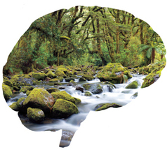 Your brain is a rain forest | OdeWire | Dyslexia DiaBlogue® | Scoop.it