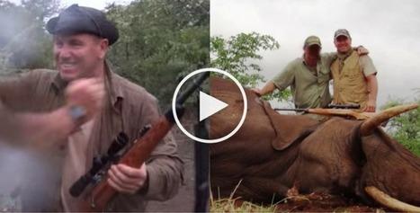 La vidéo choquante du célèbre footballeur Pascal Olmeta tuant froidement un éléphant à bout portant - HolidogTimes | Actualités écologie | Scoop.it