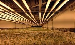 World's largest vertical farm grows without soil, sunlight or water in Newark | Vertical Farm - Food Factory | Scoop.it