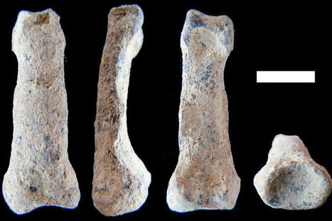 L'os de la plus ancienne main humaine retrouvé en Tanzanie | Aux origines | Scoop.it