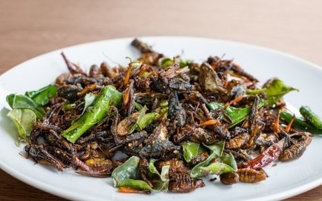 Are Insects Edible? | Entomophagy: Edible Insects and the Future of Food | Scoop.it