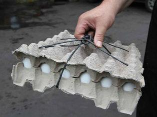 Injustificado, desabasto y aumento en precio de pollo y huevo: SE :: El Informador | Inocuidad de alimentos | Scoop.it
