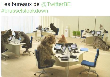 Autocensure des médias belges: pas de quoi fouetter un chat | DocPresseESJ | Scoop.it