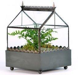 A terrarium treat for you | Dirt Du Jour | Annie Haven | Haven Brand | Scoop.it