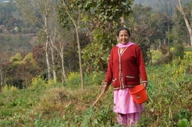 Freak frost pushes Nepalese farmers to insure crops - AlertNet | climate change nepal | Scoop.it