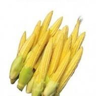 English Vegetable Seeds, Vegetable seeds online india, Herb seeds online, Buy seeds online india | Buy flower seeds online, Flower seeds online, Garden seeds, Flower seeds, Herb seeds | Scoop.it