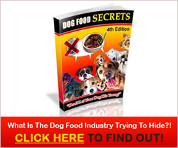 About | Healthy Dog Food Plans | Social media Marketing 1 | Scoop.it