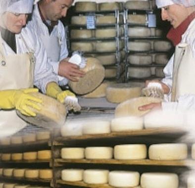Coup de cœur : Matocq, le plaisir du fromage | Agriculture en Pyrénées-Atlantiques | Scoop.it