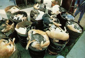 Puppy Farms, Puppy Mills And Back Yard Breeders   Animals R Us   Scoop.it
