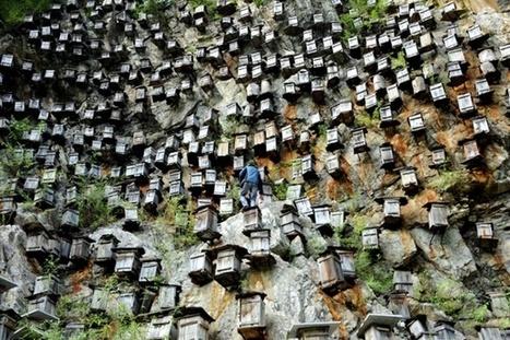 Beekeeping in China - in pictures | Art-nstuff | Scoop.it