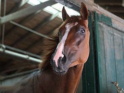 Just Retired Dullahan Euthanized Due to Colic | Horse Racing News | Scoop.it