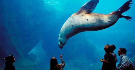10 Best Aquariums Making a Splash in the U.S. | Nerd Vittles Daily Dump | Scoop.it