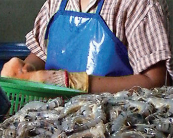 Seafood companies vow to end child labour | Aquaculture Directory | Aquaculture Directory | Scoop.it