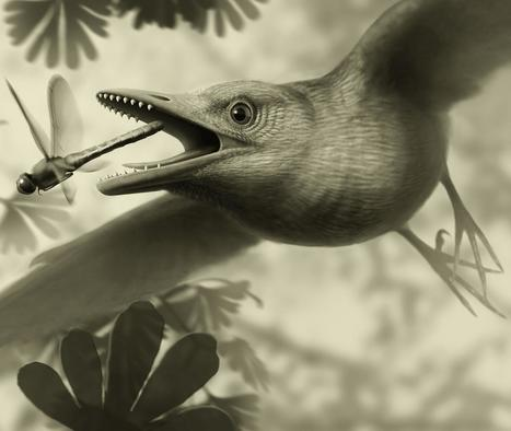 Tiny ancient fossil from Spain shows birds flew over the heads of dinosaurs   Geology   Scoop.it