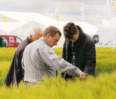 Rothamsted mention: Testing times ahead as grower pressures build   BIOSCIENCE NEWS   Scoop.it
