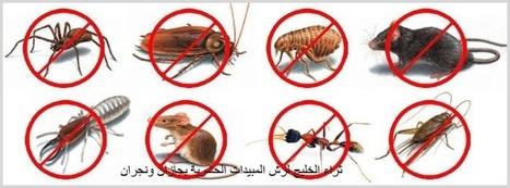 رش مبيدات ومكافحة حشرات بجازان ونجران - 0555018675 - ثراء الخليج | شركة ثراء الخليج | Scoop.it