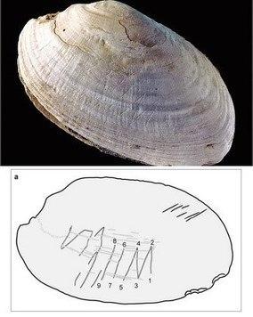 Homo & Evolució: Homo erectus realitzava marques geomètriques.   Diari de les CIÈNCIES DE LA  NATURALESA   Scoop.it