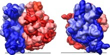 Engineered ribosomal RNA enhances the efficiency of selenocysteine incorporation during translation   SynBioFromLeukipposInstitute   Scoop.it