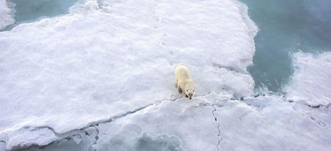 Il va faire plus chaud au Pôle Nord que dans certaines parties du Sahara | environnement et santé | Scoop.it