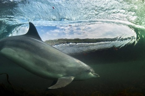 The winners in the British Wildlife Photography Awards 2013 - Telegraph   Cool Science News   Scoop.it