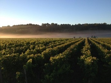 Bordeaux 2013: Low-key en primeur campaign expected as Le Pin pulls out | decanter.com | Southern California Wine and Craft Spirits Journal | Scoop.it