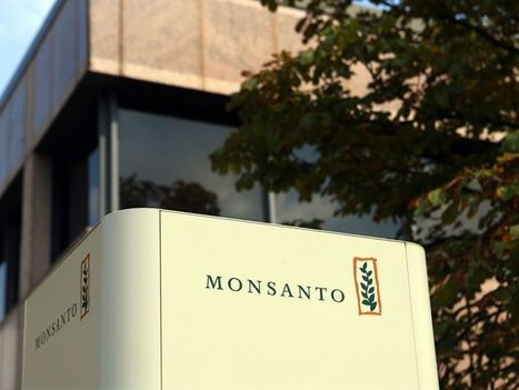 Monsanto, the premium ag player, ends up being a bargain for Bayer | Grain du Coteau : News ( corn maize ethanol DDG soybean soymeal wheat livestock beef pigs canadian dollar) | Scoop.it