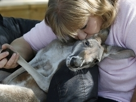 US woman and pet kangaroo find new home - Herald Sun   Top Rated Therepist   Scoop.it
