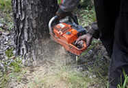 New Agriculturist: News brief - Local control of forests increases income and sustainability | The Agrobiodiversity Grapevine | Scoop.it