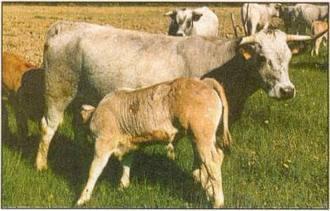 Onnouscachetout.com - Le Lait de vache, un aliment non spécifique à l'Homme | Alimentation | Scoop.it