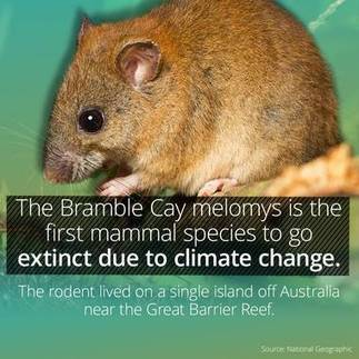 This Cute Animal Has Just Gone Extinct Due To Climate Change From Informoverload - Path - Curiosity | VCE Environmental Science | Scoop.it