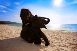 Un bébé éléphant embauché à l'hôtel Angsana Laguna de Phuket | Thailande Info | Scoop.it