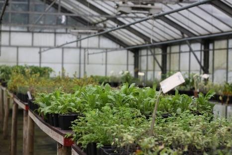 Urban farming: world-wide trend met with response in Flanders | smart cities inspiration blog | environnement | Scoop.it