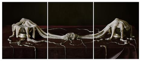 Tara Sellios Impulses | Photography Now | Scoop.it