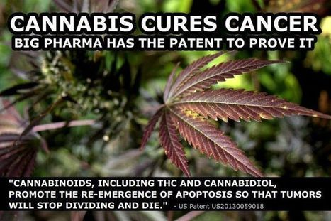 The Endocannabinoid System and How THC Cures Cancer | Wake Up World | Hemp Miracle | Scoop.it